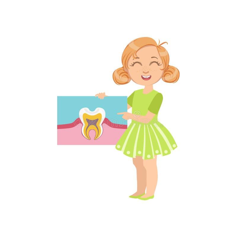 Fantastisch Zahnanatomie Für Kinder Ideen - Menschliche Anatomie ...
