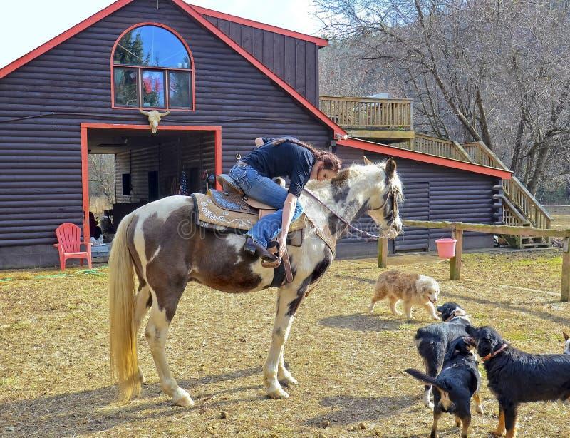 Mädchen an der Scheune, die fertig wird, ihr Pferd zu reiten lizenzfreies stockfoto