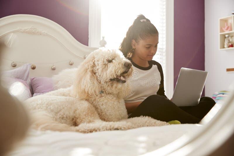 Mädchen des jungen jugendlich, das Laptop auf ihrem Bett neben Schoßhund verwendet stockfotografie