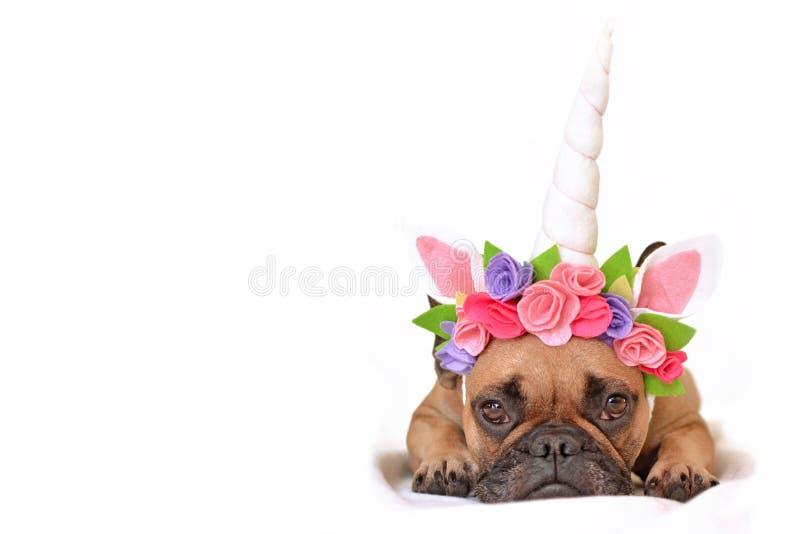 Mädchen französischer Bulldogge Browns Hundeoben gekleidet mit schönem Einhornhornstirnband mit den Blumen, die auf weißem Hinter lizenzfreies stockbild