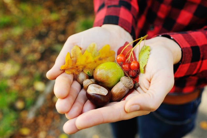 Mädchen hält ihre Hände auf Herbstlaub, Eicheln, Beeren und Haselnüssen lizenzfreie stockbilder