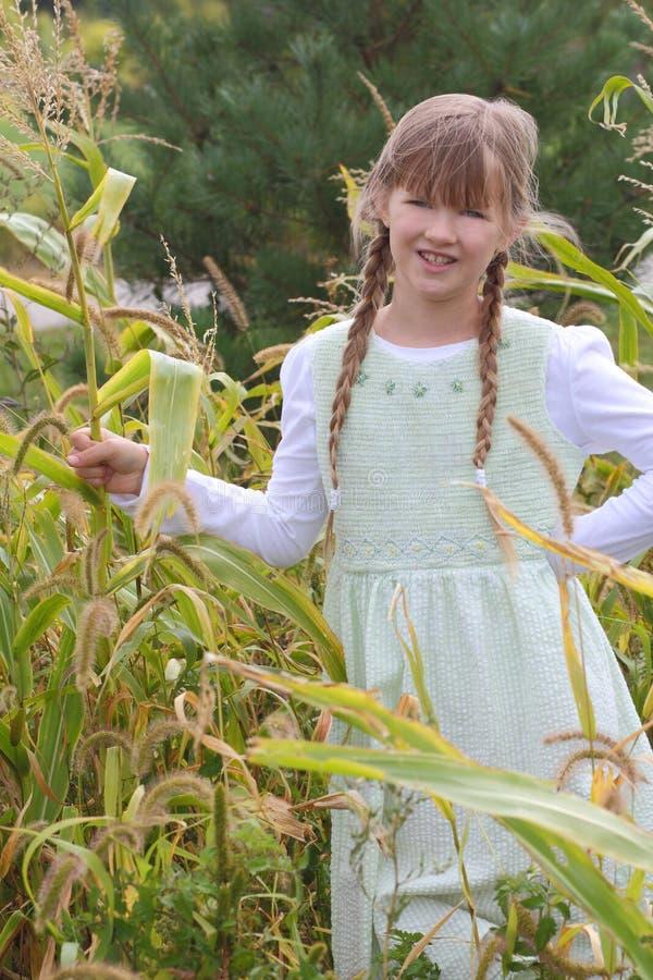 Mädchen im Maisgarten stockbilder
