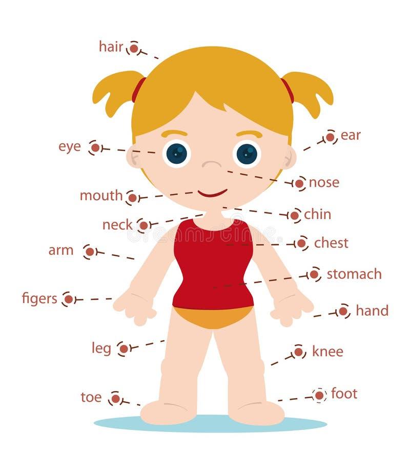 Mädchen-Körperteile lizenzfreie abbildung