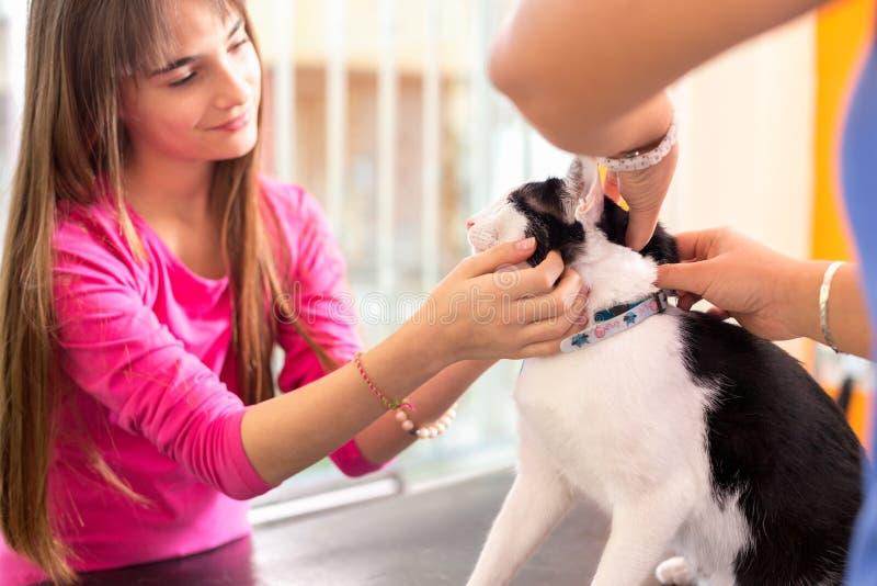 Mädchen mit der Katze, die ihr Haustier in der Tierarztklinik tröstet stockfotos