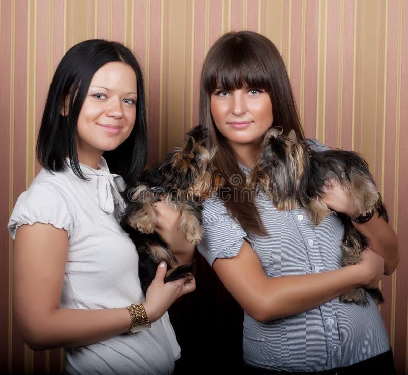 Mädchen mit puppys stockbild