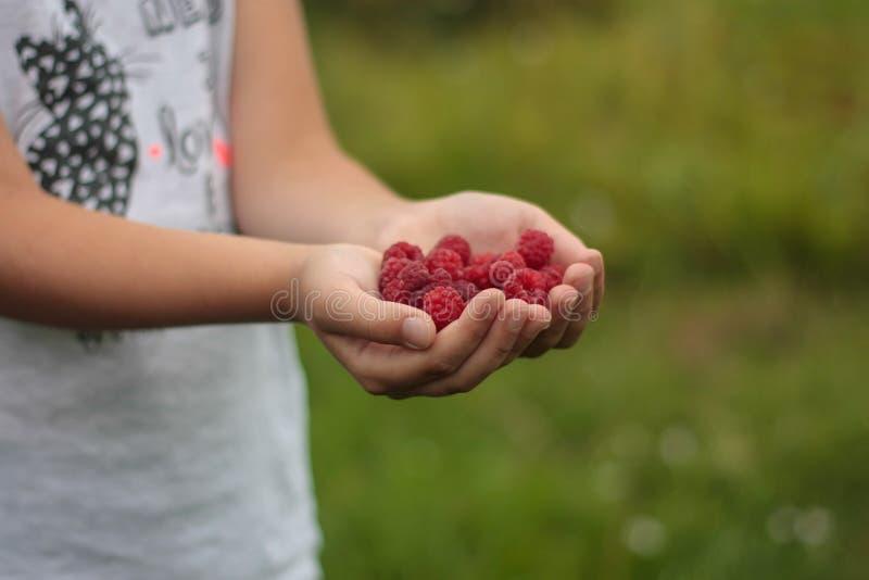 Mädchen mit rapsberry in ihren Händen stockbilder