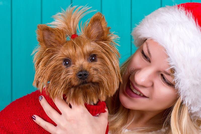 Mädchen in Sankt-Kappe mit yorkie Hund in der roten Strickjacke stockfoto