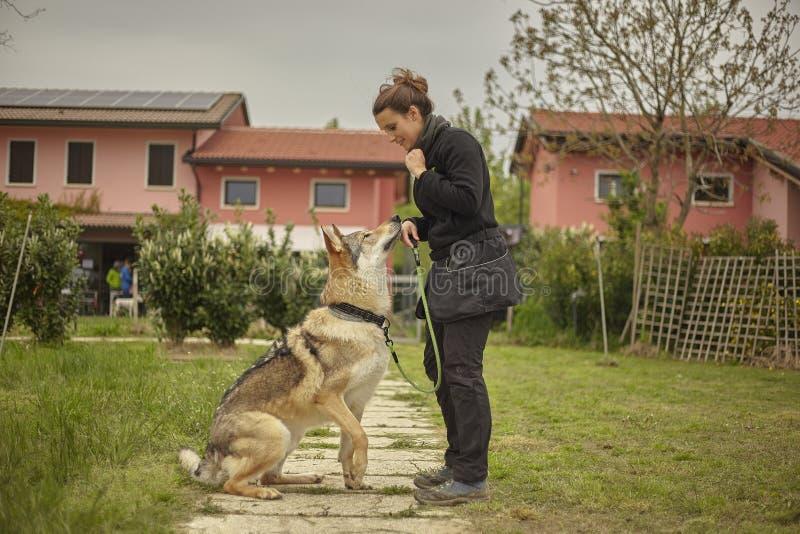 M?dchen spielt mit einem Wolfhund #2 lizenzfreie stockfotografie