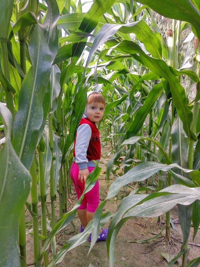 Mädchen tritt aus einem Getreidefeld heraus und lächelt lizenzfreie stockbilder