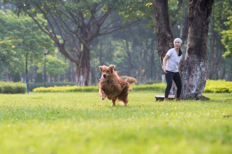 Mädchen und golden retriever, die im Gras spielen lizenzfreie stockfotografie