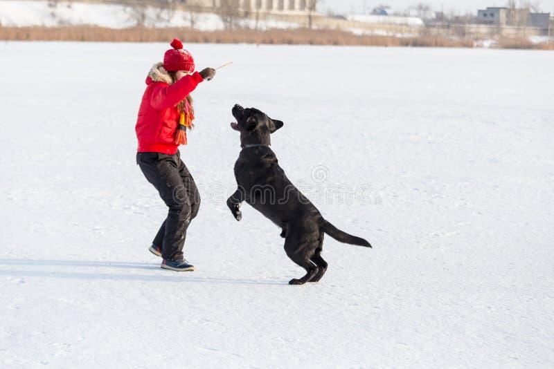 Mädchen, welches das schwarze Labrador am Winterpark ausbildet stockbilder