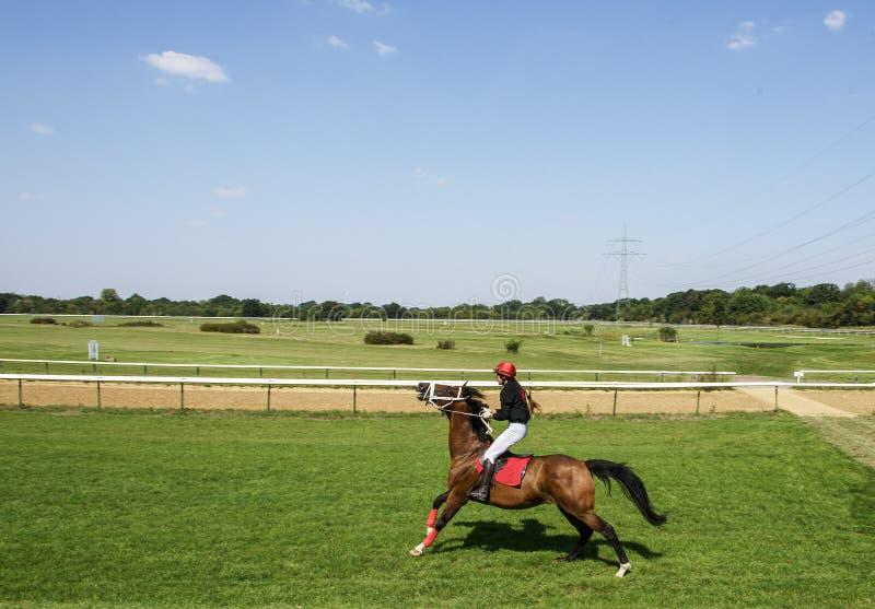 Mädchenjockey auf dem Pferd zieht Zügel lizenzfreie stockfotos
