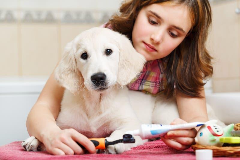 Mädchenreinigungszähne ihres Hundes zu Hause stockbilder