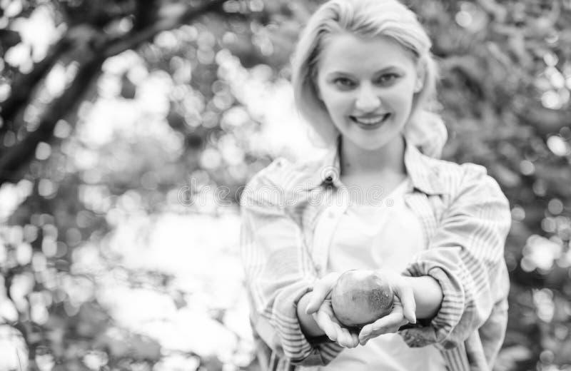 Mädchenversammlungs-Apfelernte in eigenem Garten Landwirtmädchen-Griffapfel Einheimischer erntet Konzept Gesunder Lebensstil Esse lizenzfreie stockfotografie