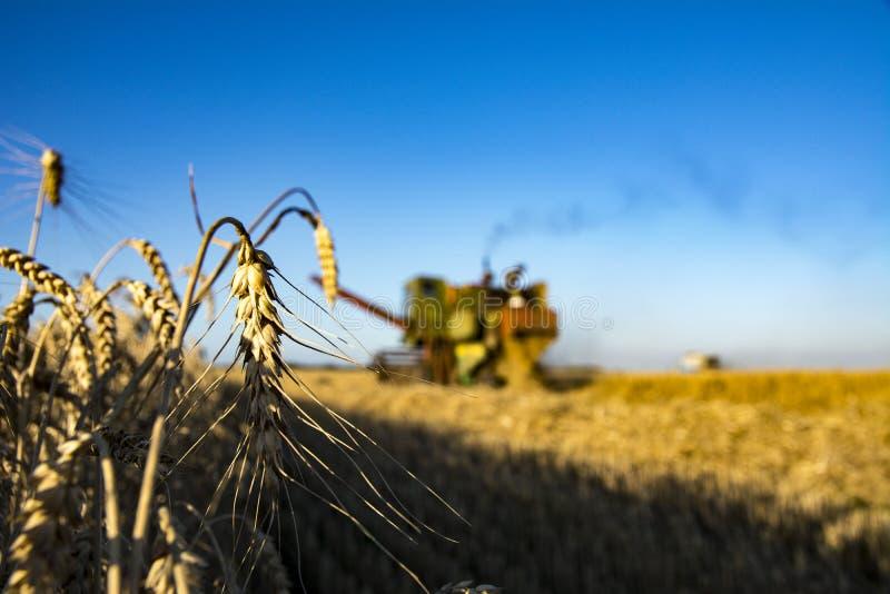 Mähdrescher auf einem Weizenfeld stockfoto