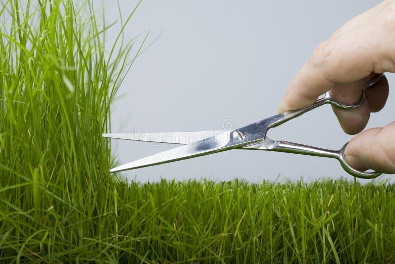 Mäher u. natürliches Gras lizenzfreies stockfoto
