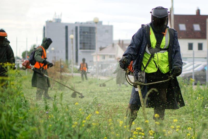 Män i skyddande dräkter mejar gräset på en stadsgräsmatta med manuella diesel- gräsklippare Förbättring och ekonomi av ett stads- royaltyfria foton