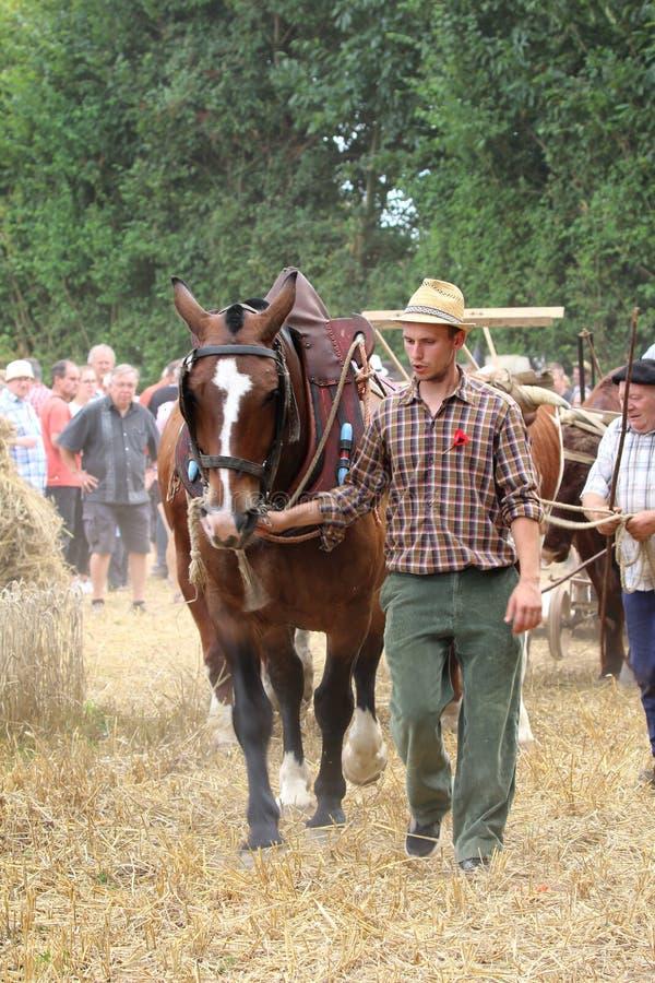 Män med hästen i sele på stora festen de la Moisson på helgonet Denis de Gastines 2018 fotografering för bildbyråer