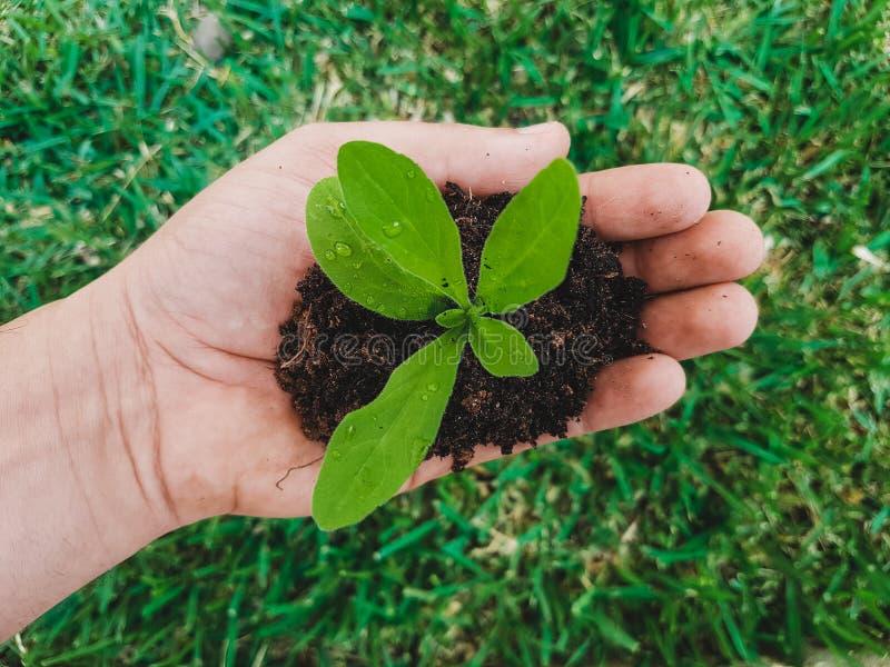 Män räcker omfamningen en liten grön växt den unga bakterien Begreppet av ekologi, miljöskydd - räddningträdbegrepp, värld royaltyfri foto