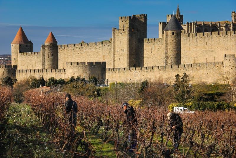 Män som arbetar i vinyards Carcassonne france royaltyfri bild