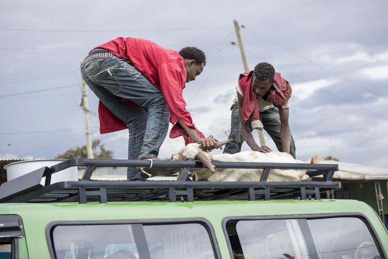 Män som laddar geten i Afrika royaltyfria foton
