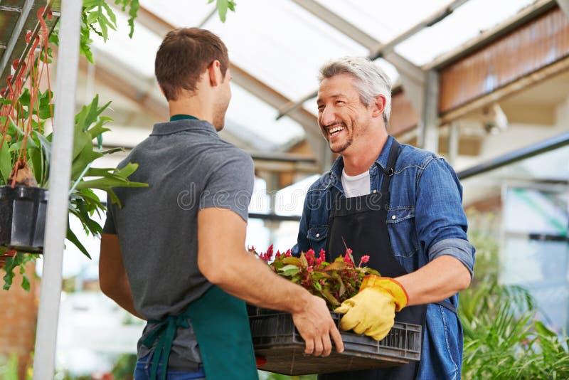 Män som tillsammans arbetar som trädgårdsmästare i barnkammare, shoppar royaltyfri foto