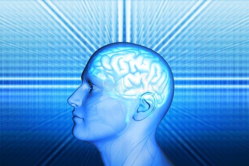 Männer und Gehirn lizenzfreie abbildung