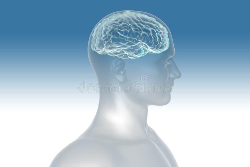 Männer und Gehirn stock abbildung