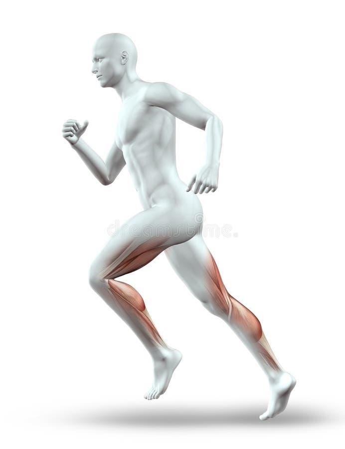 Männerfigur 3D, die mit den Muskeln läuft lizenzfreie abbildung