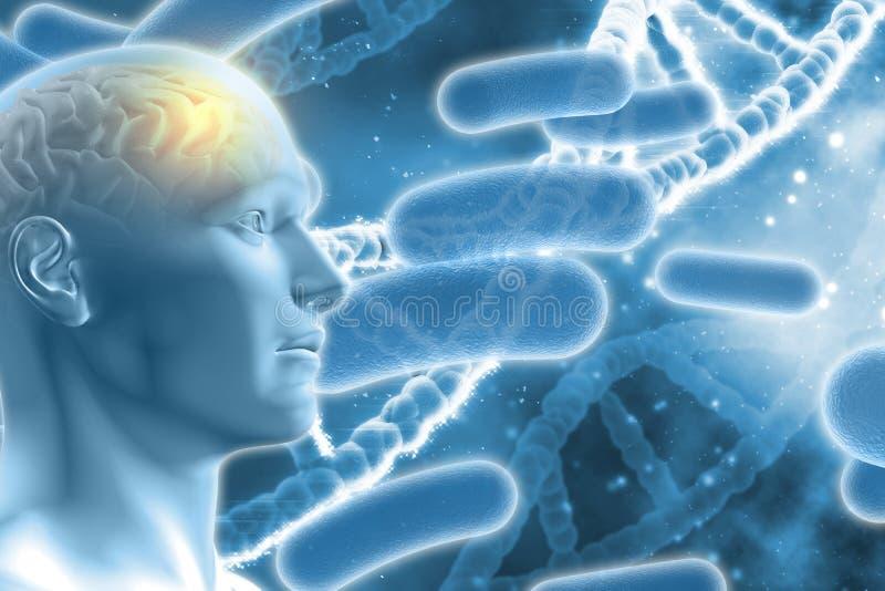 Männerfigur 3D mit Gehirn auf medizinischem Hintergrund DNA stock abbildung
