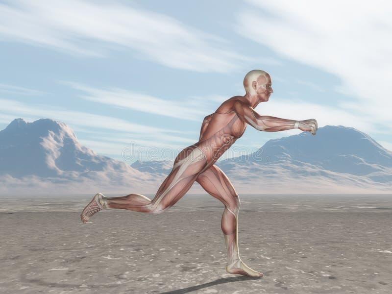 Männerfigur 3D mit Muskelkartenbetrieb in der Landschaft lizenzfreie abbildung