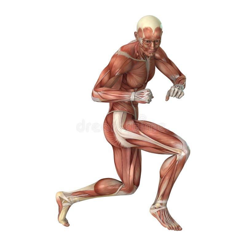 Männerfigur-Muskel-Karten der Wiedergabe-3D auf Weiß stock abbildung