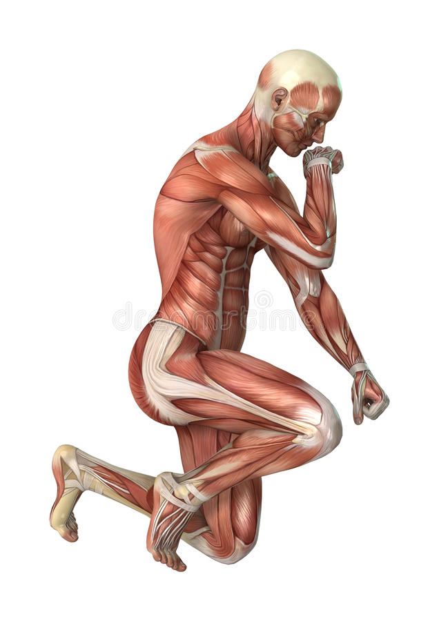Männerfigur-Muskel-Karten der Wiedergabe-3D auf Weiß lizenzfreie abbildung