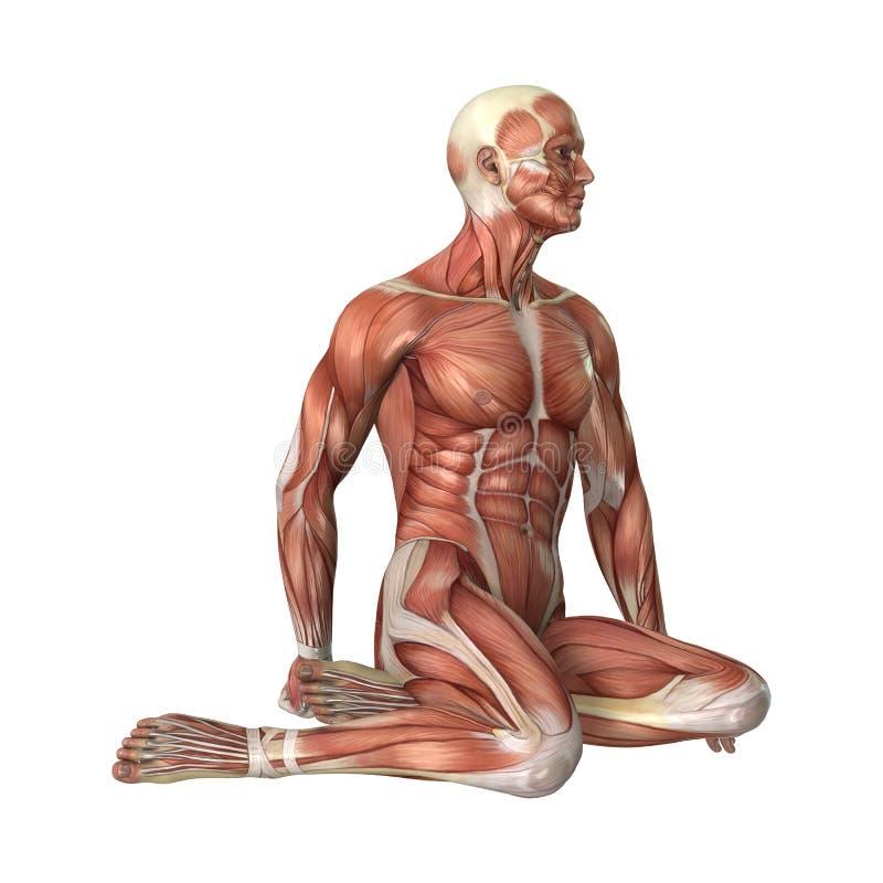 Männerfigur-Muskel-Karten der Wiedergabe-3D auf Weiß vektor abbildung
