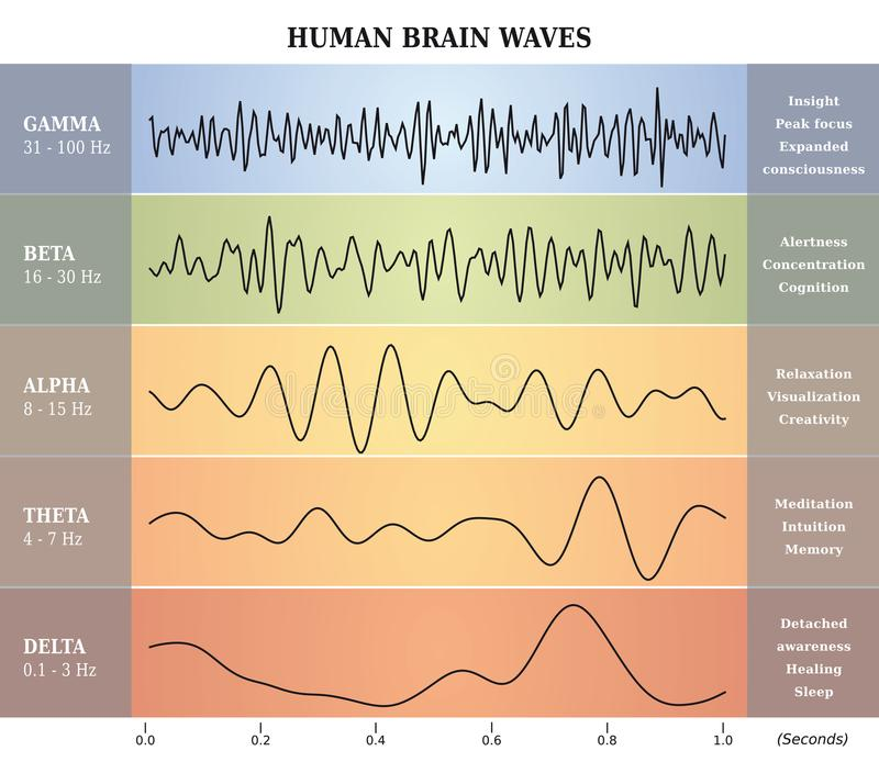 Människa Brain Waves Diagram/diagram/illustration royaltyfri illustrationer