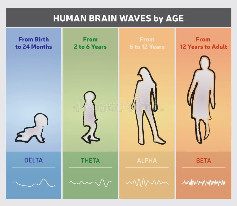 Människa Brain Waves vid ålderdiagramdiagrammet - folkkonturer stock illustrationer
