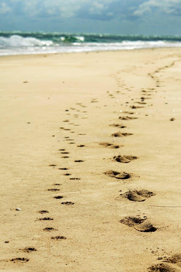Människa- och hundfotspår i strandsandtelefon tapetserar arkivbilder