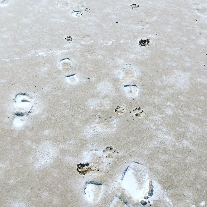 Människa- och hundfotspår på sjön Eyre, södra Australien royaltyfria bilder