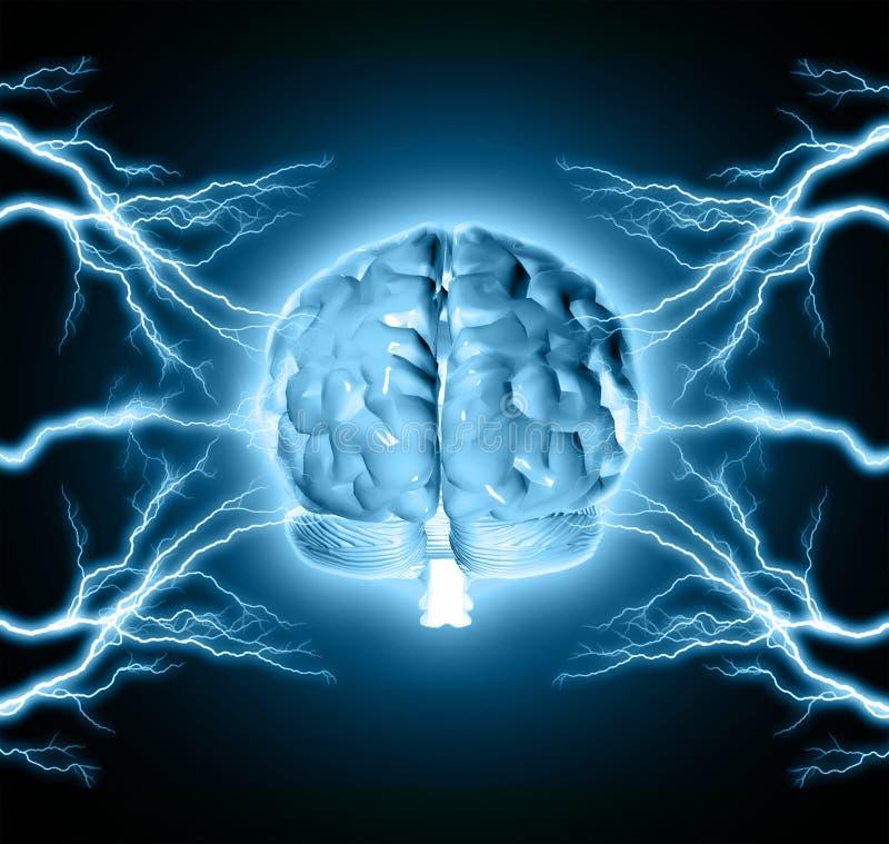 Människahjärna