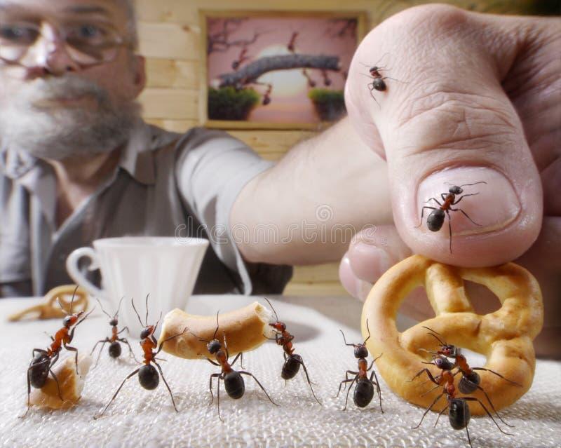 Människan belönar myror med bakar royaltyfri fotografi