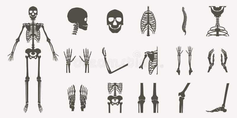 Människan benar ur den ortopediska och skelett- konturn royaltyfri illustrationer