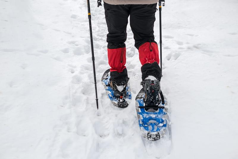 Människan i snöskor med skakstolpar är snön i skogen arkivbilder
