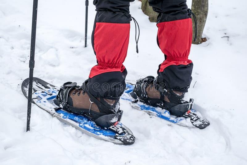 Människan i snöskor med skakstolpar är snön i skogen royaltyfri fotografi
