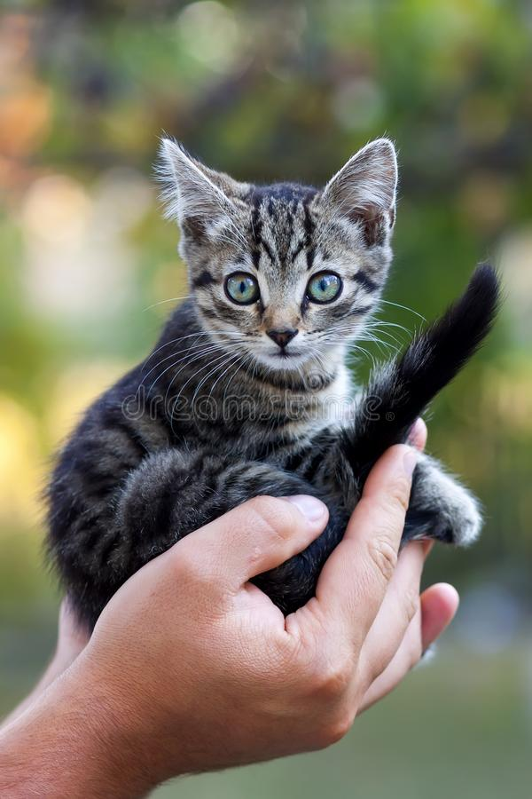 Människan räcker den hållande nätta lilla kattungen fotografering för bildbyråer