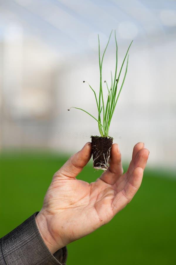 Människan räcker den hållande unga växten med jord över suddig naturbakgrund Plantan för CSR för dagen för ekologivärldsmiljön gå arkivbilder