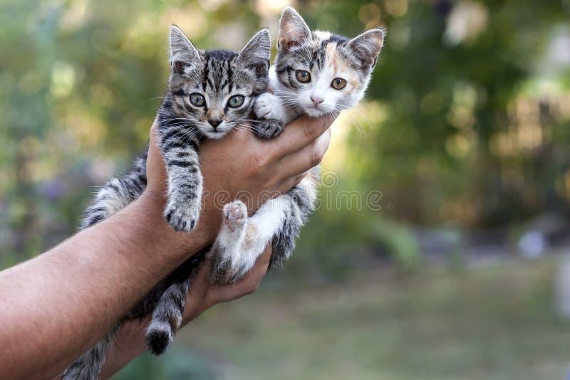 Människan räcker hållande nätta små kattungar arkivfoto