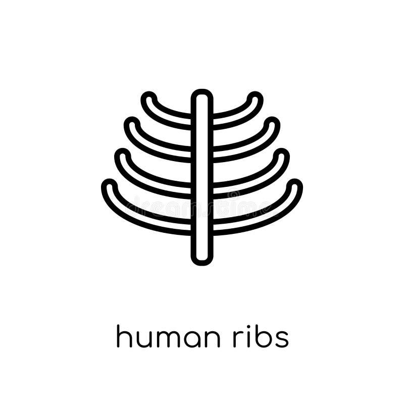 Människan ribs symbolen Mänsklig stödico för moderiktig modern plan linjär vektor stock illustrationer