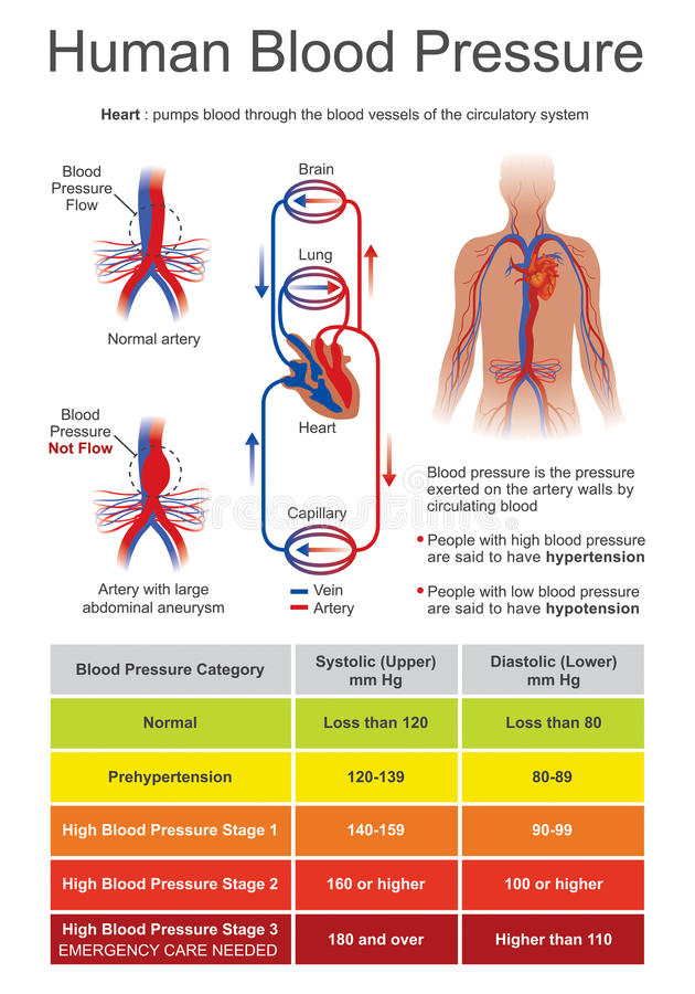 Människoblodtryck vektor illustrationer