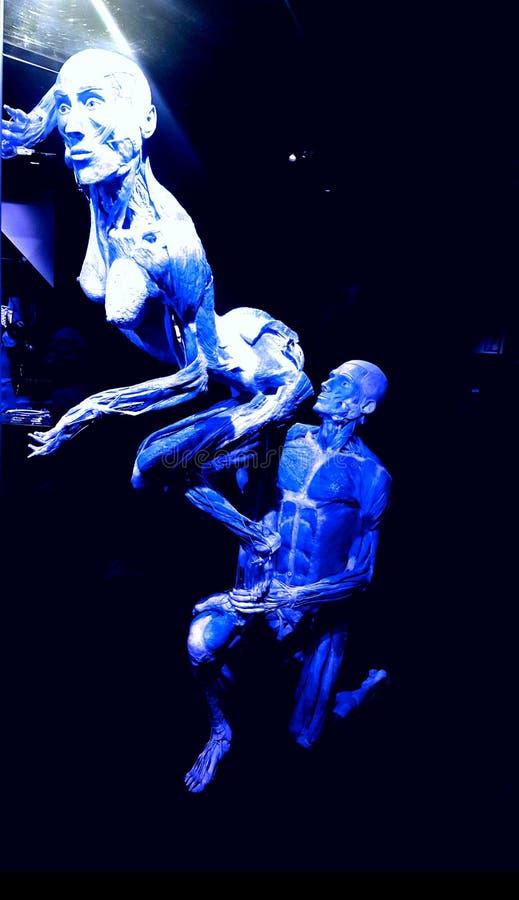 Människokropp i blå vision arkivbild