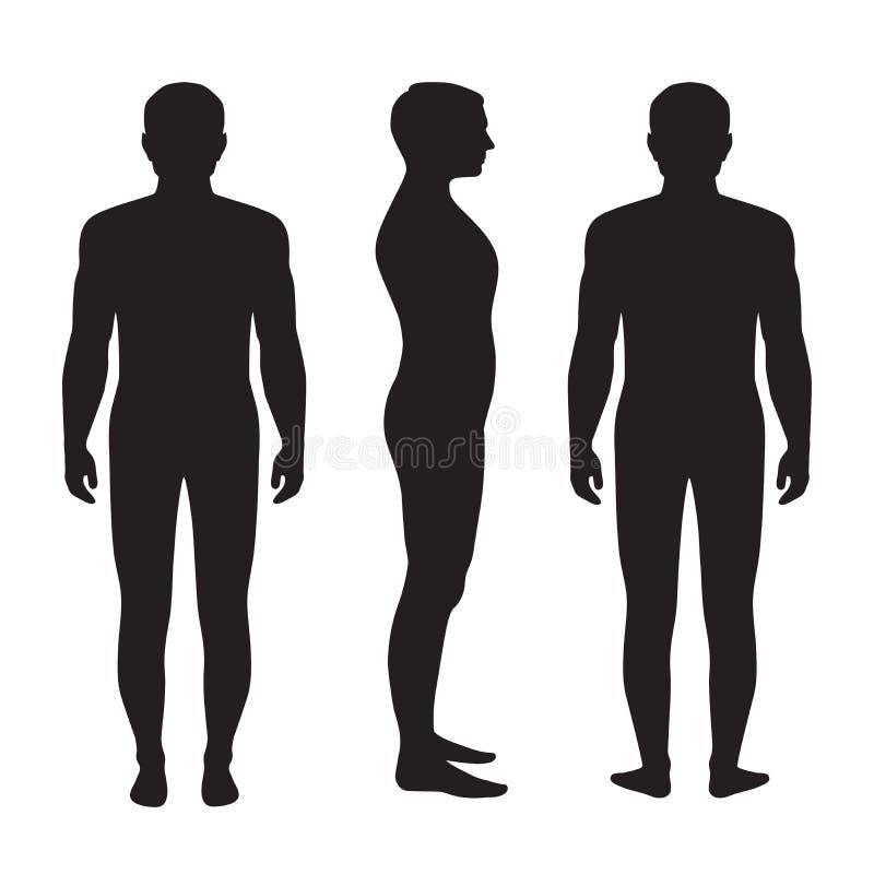 Människokroppanatomi, vektor illustrationer
